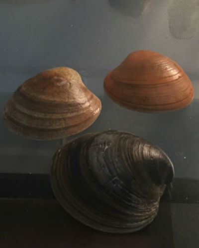 clam shell photo